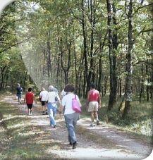 Chemins, sentiers de randonnée et Aires de pique nique